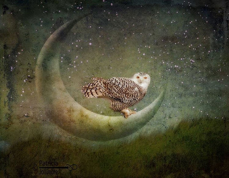 The Owl and the Moon. A painterly image by featured artist, Patricia Jollimore