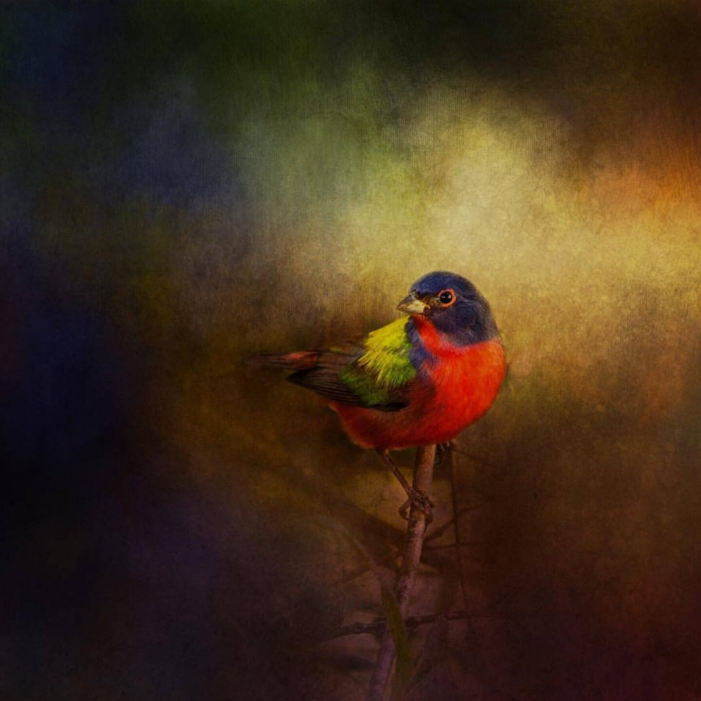 An image of a Painted Bunting by featured artist, Susie Nishio