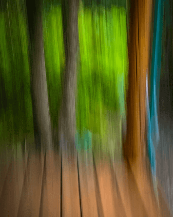 Trees blurred to make an abstract expressionist image
